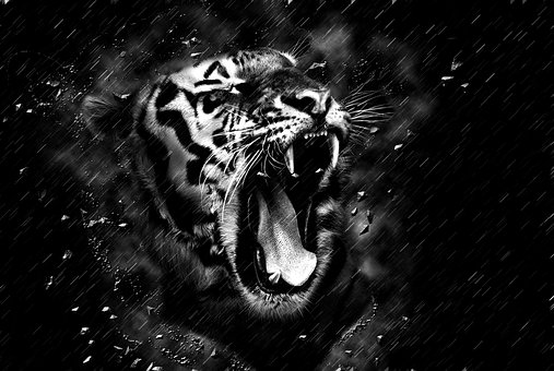 tiger-1963828__340